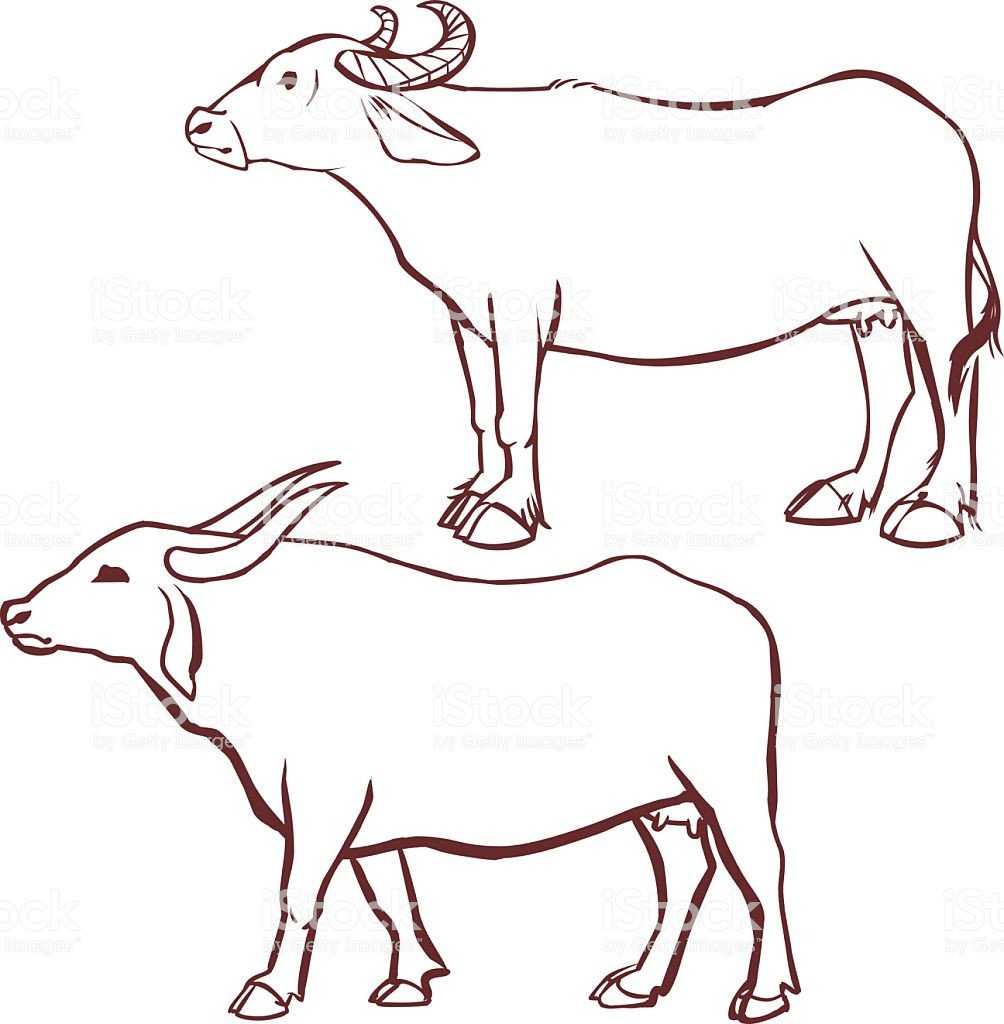 Outline Of A Cow Buffalo Cow Outline Stock Vector Art & More Of 2015