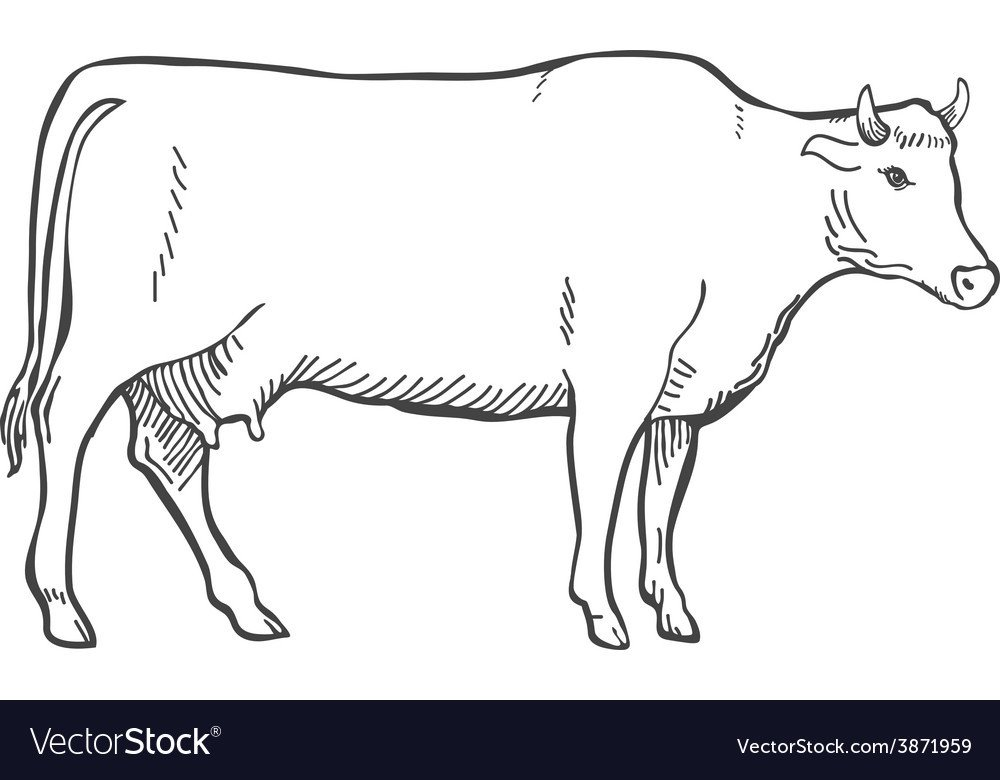 Outline Of A Cow Hand Draw Cow Outline Royalty Free Vector Image