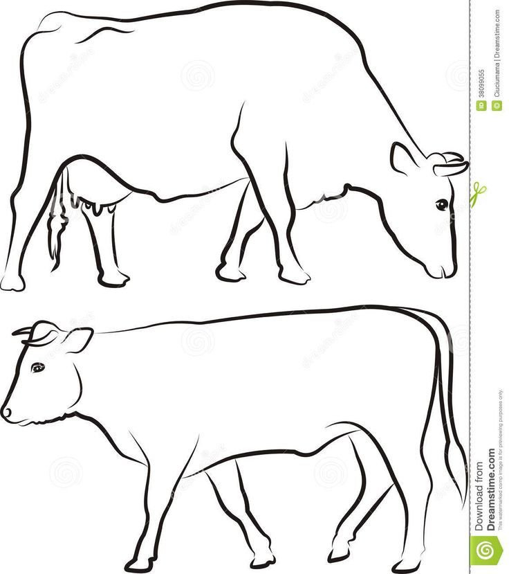 Outline Of A Cow Image From Bull