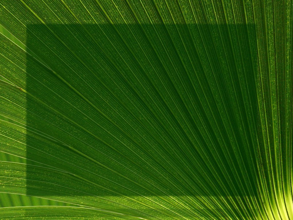 Palm Sunday Powerpoint Template Free Palm Fronds Church Slides Perfect Screens for the