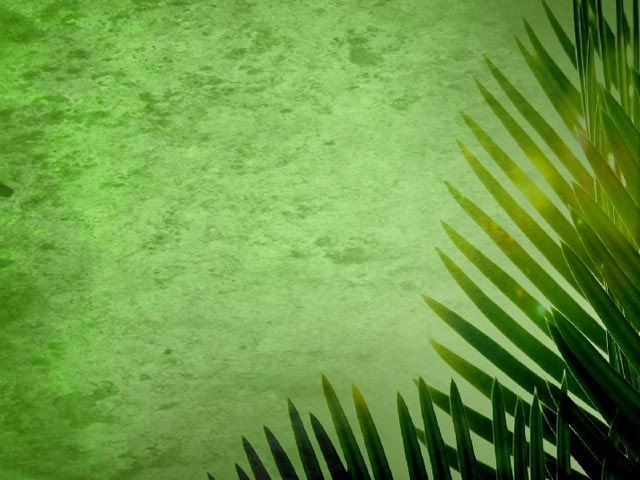 Palm Sunday Powerpoint Template Free Palm Sunday Backgrounds Palm Sunday Loop 01
