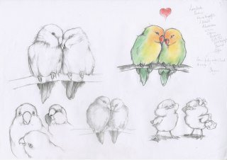 Pencil Drawings Of Love Love Birds Drawings In Pencil Drawing Litle Pups