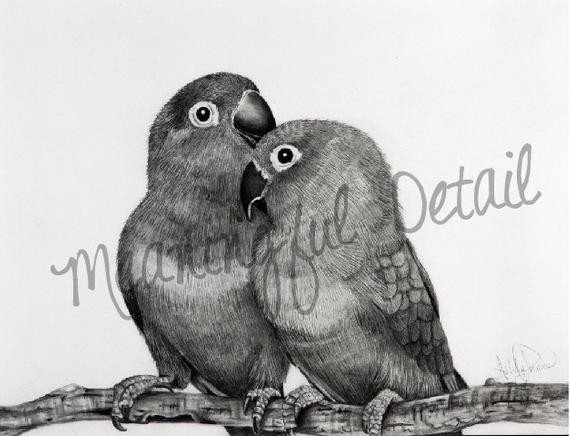 Pencil Drawings Of Love Love Birds original Pencil Drawing
