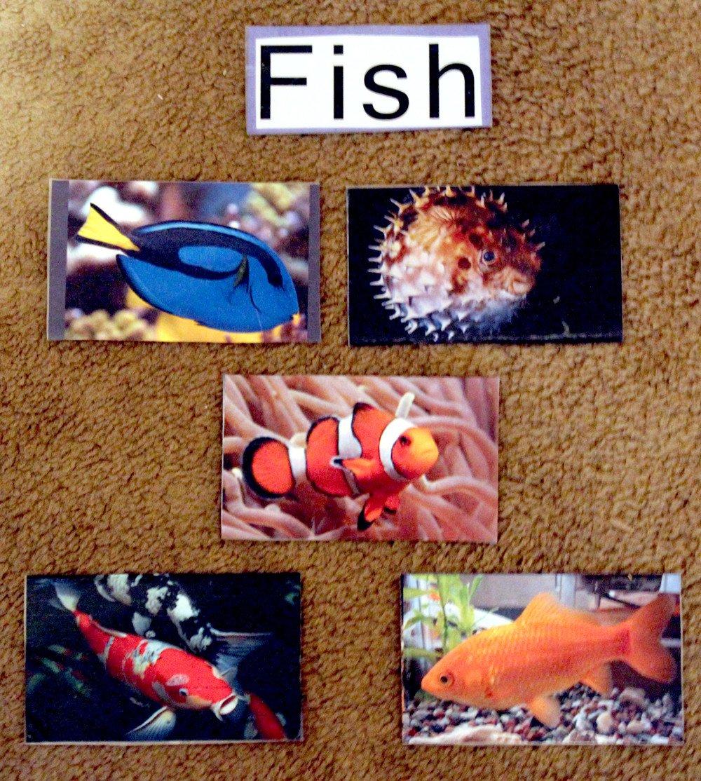 Preschool Fish theme Brilliant Bundles Fish Crafts and Activities for An Ocean