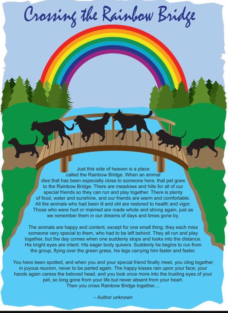 Rainbow Bridge Template How to Deal with Pet Loss & My Story Nubia S Nonsense