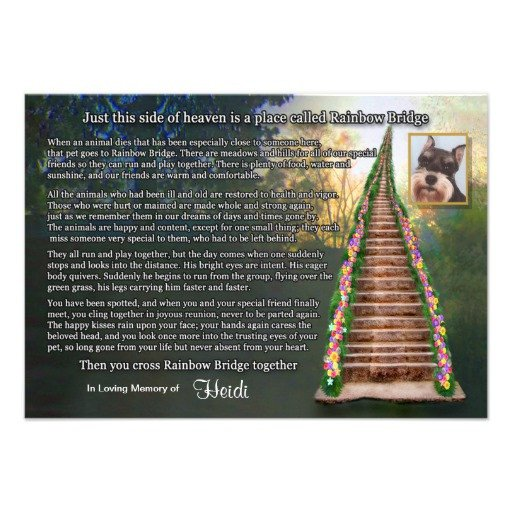 Rainbow Bridge Template Rainbow Bridge Pet Loss Sympathy Card Custom Invite