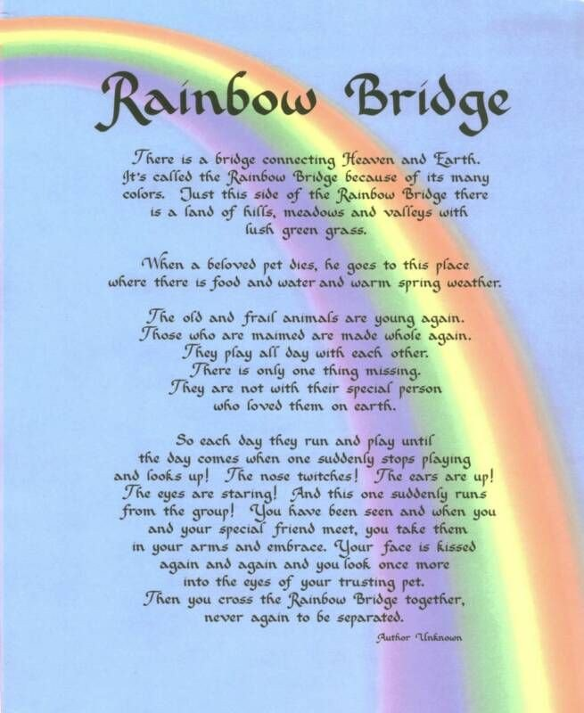 Rainbow Bridge Template Rainbow Bridge Prayer – the Passionate Gardener A