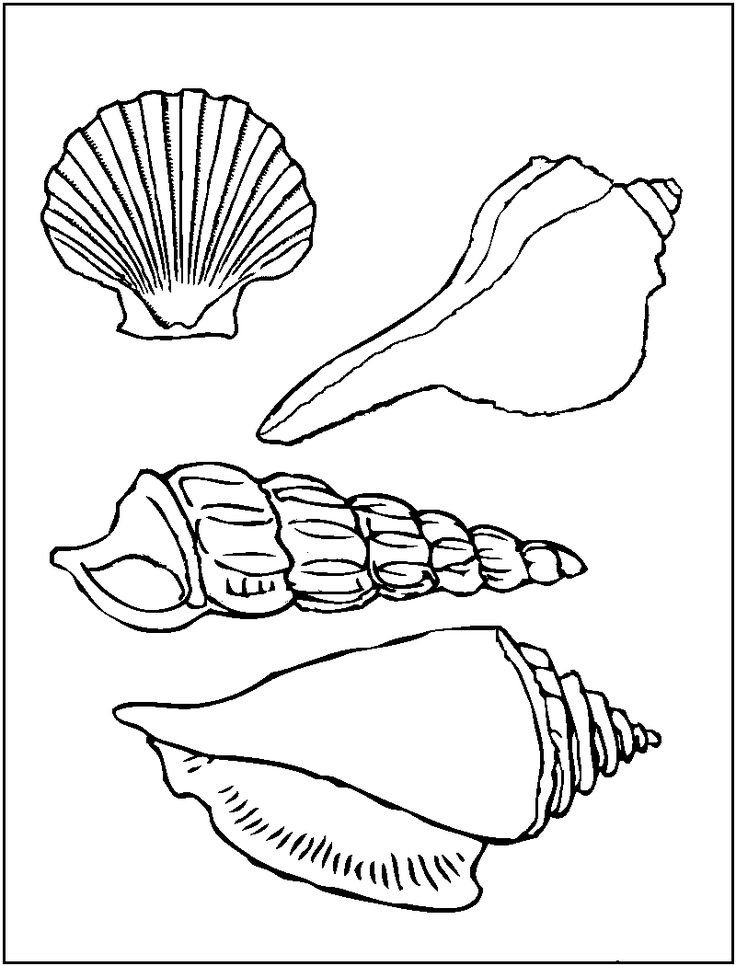 Seashell Template Free Printable Printable Of Sea Shells