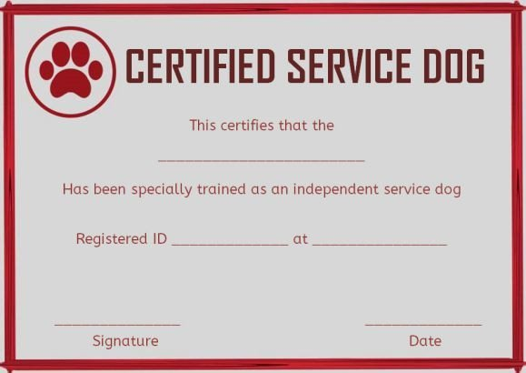 Service Dog Certificate Template Dog Certification for Service Dogs