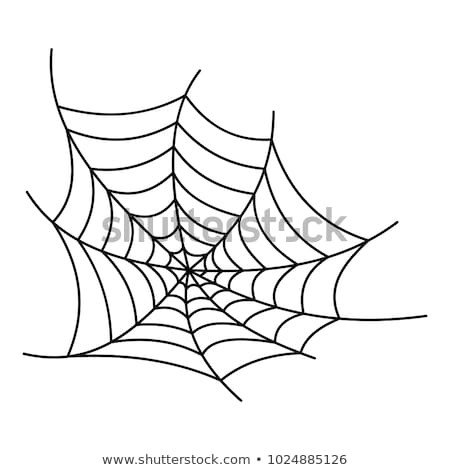 Spider Web Outline Spiderweb Stock Royalty Free & Vectors
