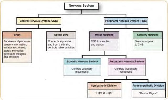 System Disorder Template ati Cns & Pns Pathophysiology Nursing 451 with Dr De