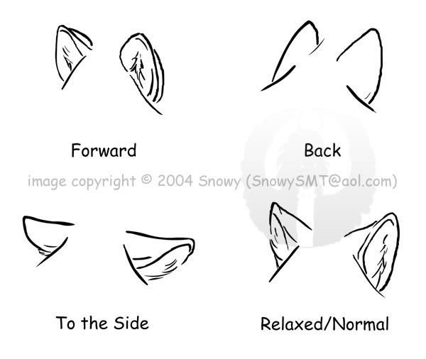 Wolf Ears Template Wolf Ear Pattern Art Stuff Pinterest